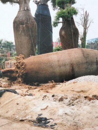 Giant Bottle trees