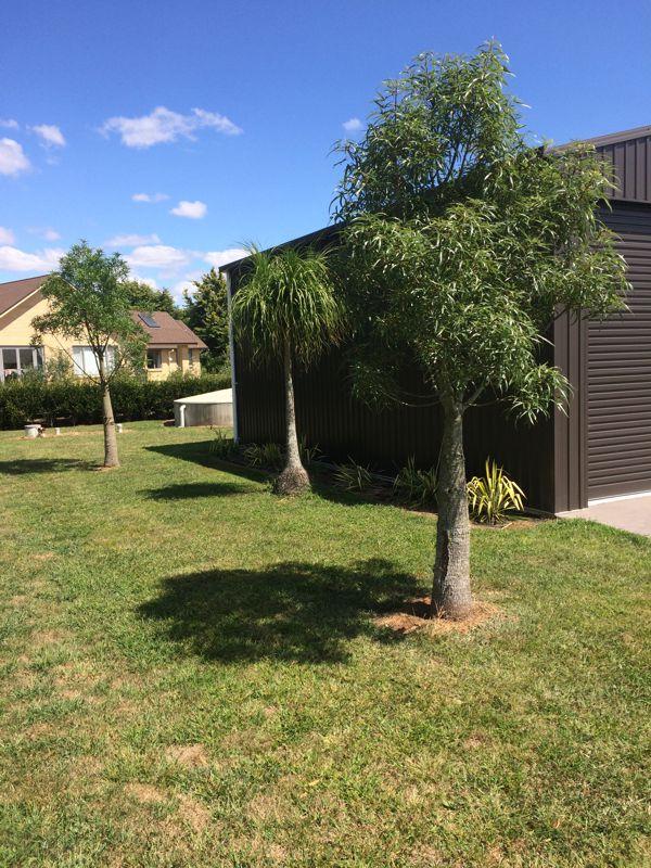 Bottel Trees NZ