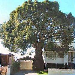 Bottel Trees